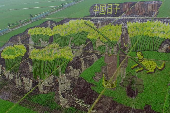 Sztuka 3D na chińskich polach ryżowych