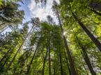 Morawiecki: rząd absolutnie nie ma zamiaru prywatyzować Lasów Państwowych