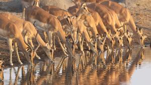 park narodowy Afryka